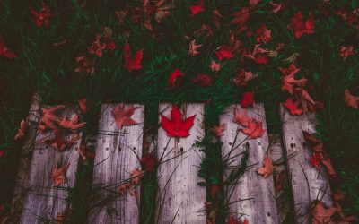 Radical Pleasure 101: Fall leaves- a simple practice you can try today